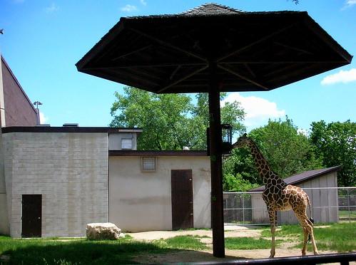 Zoo VIII