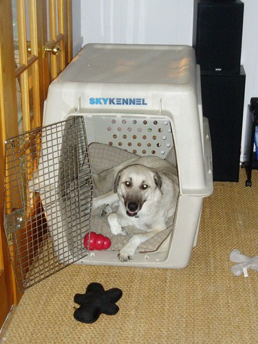 Bridget in kennel picture