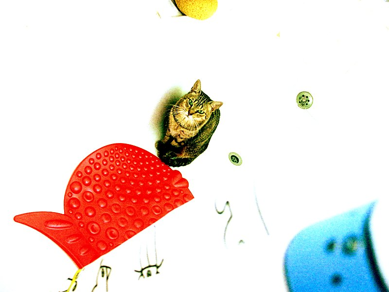 Catcard II