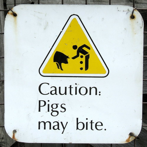 Pigs May Bite
