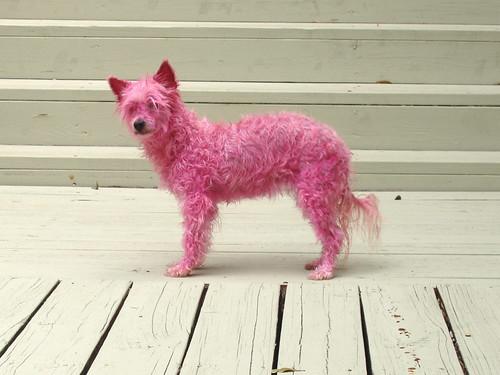 Pink NoEyes