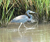 Blur Heron