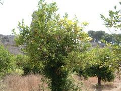 Sicilia 2006