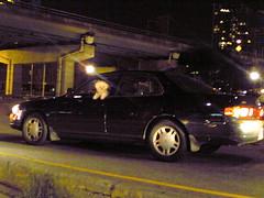 Dog driving car.