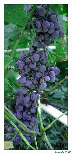 soft color grapes