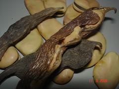 Michirones (habas secas)