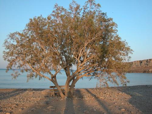 Un arbre un banc la m�diterran�e