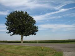Illinois sky