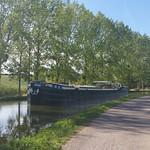 Magnolia cruising in Burgundy