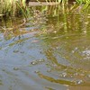 dans le bassin - aout 2015 - des ronds dans l'eau (800x798)
