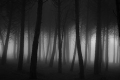 Lost in the forest photo by Artur Tomaz