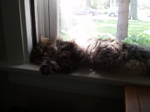 Window Nap