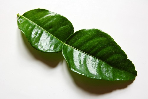 kaffir lime leaf© by haalo