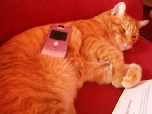 New Phone! Pink Razr