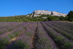 Img2006-07-05-0131-1 (Provence Cote d'Azur)