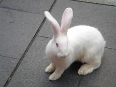 Rabbits photo by Halans