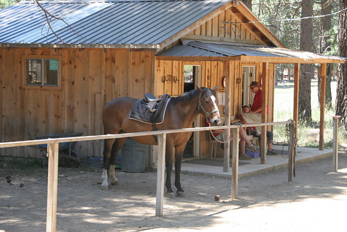 One of the camp horses
