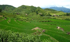 Near Tam Duong