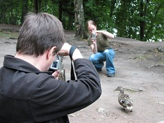 Taking photos of a duck