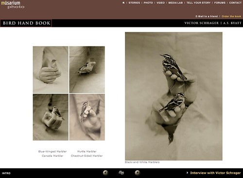Musarium- Bird Hand Book