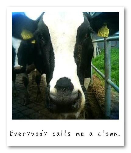 I'm not clown, but ...