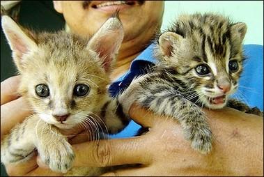 wee wild kitties