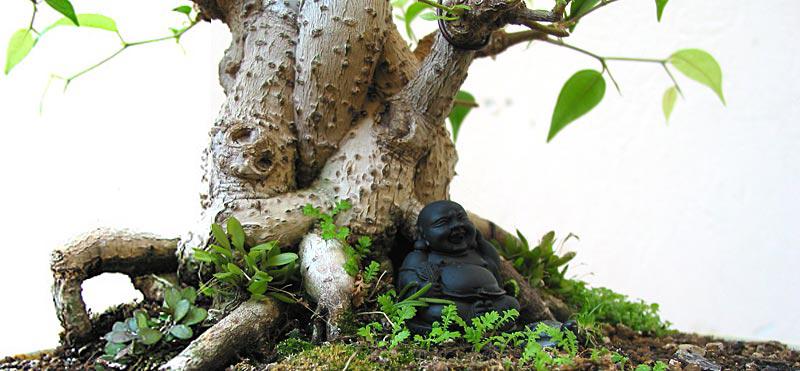 pin bonsai baum form kunst zusammensetzung. Black Bedroom Furniture Sets. Home Design Ideas