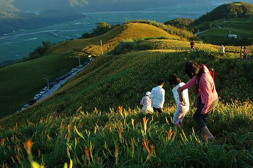 盛滿金針與遊客的六十石山