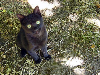 Farm cat pictures
