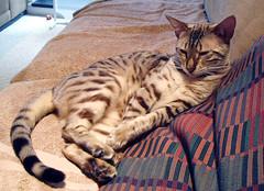 Pasha reclining