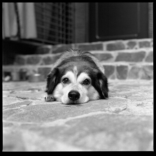060804_puppy_002