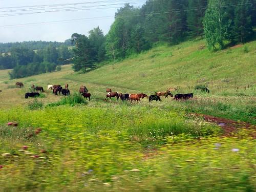 Кони \ Horses