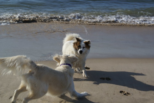 Frisket & Gracie, Indian Wells Beach, Amagansett, NY (August 13, 2006)