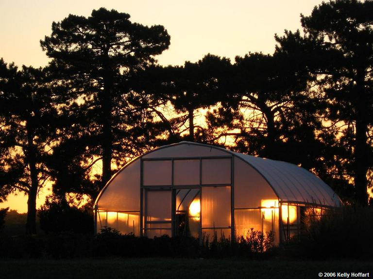 Sunrise through a Greenhouse