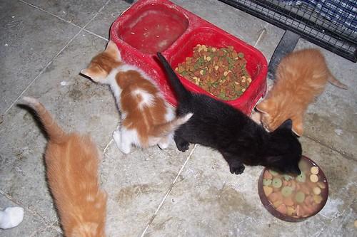 gatos_abuela