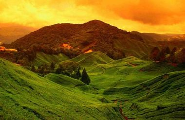 Dawn of Cameron Highlands