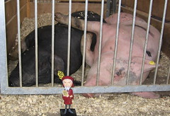 Chaucer gets piggy