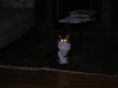 Cat . . . of DOOM!