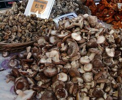 Mushroom Bounty at Portland Farmers Market