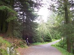 Walking round Mount Fløyen