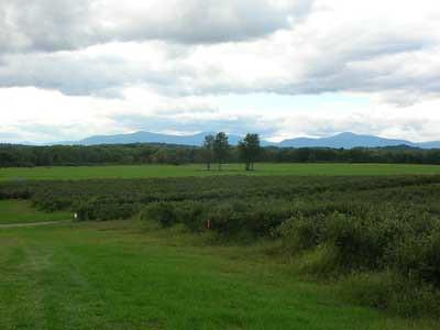 blackberry fields