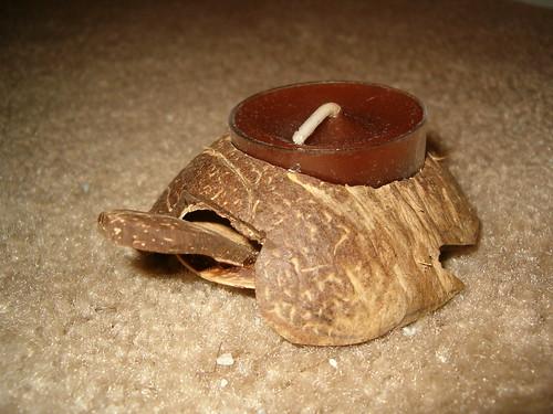 Coconut Husk Turtle 1