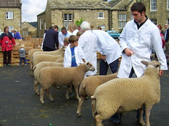 Judging at Masham