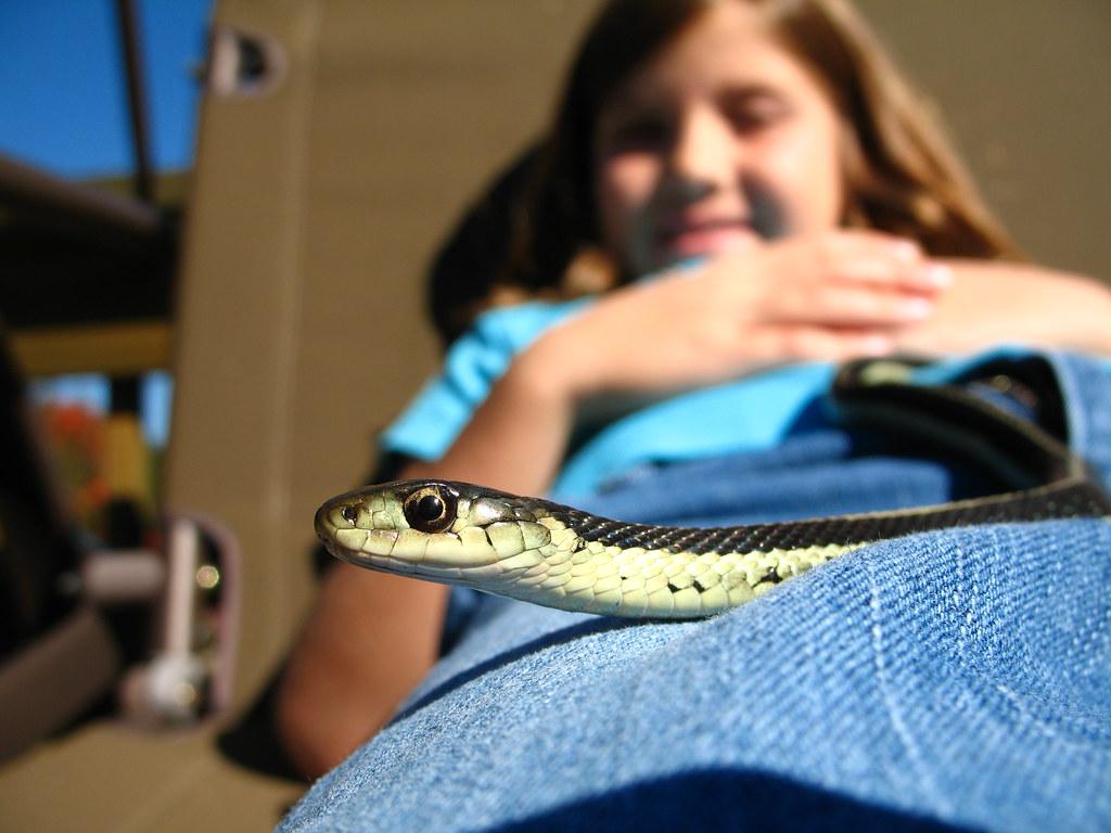 Maxly the snake