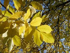 Herbstimpressionen2