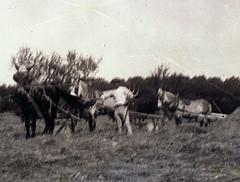 La moisson (détail,autour de 1900)