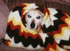 Fritz in a blanket (Small)