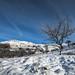 Trees in Dick Clough - Saddleworth