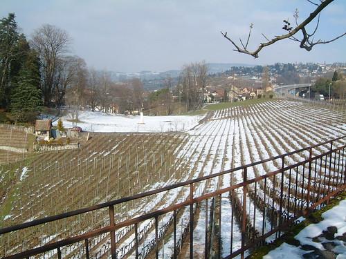 Montreux Vineyards Winter
