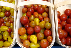 tomatoes, M. Plante